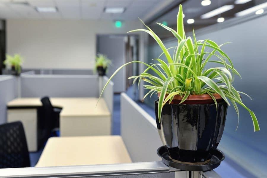 indoor plants healthier office