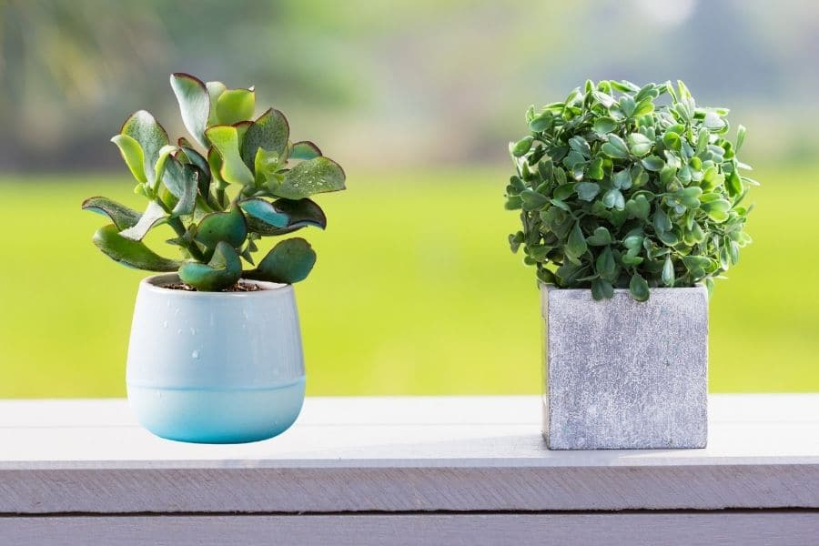 artificial plants vs natural plants