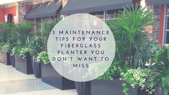 Maintenance Tips For Your Fiberglass Planter