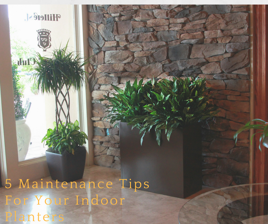 5 Maintenance Tips For Your Indoor Planters