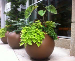 Commercial grade planters in Canada