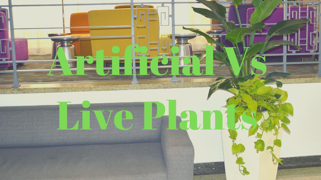 Artificial Vs Live Plants
