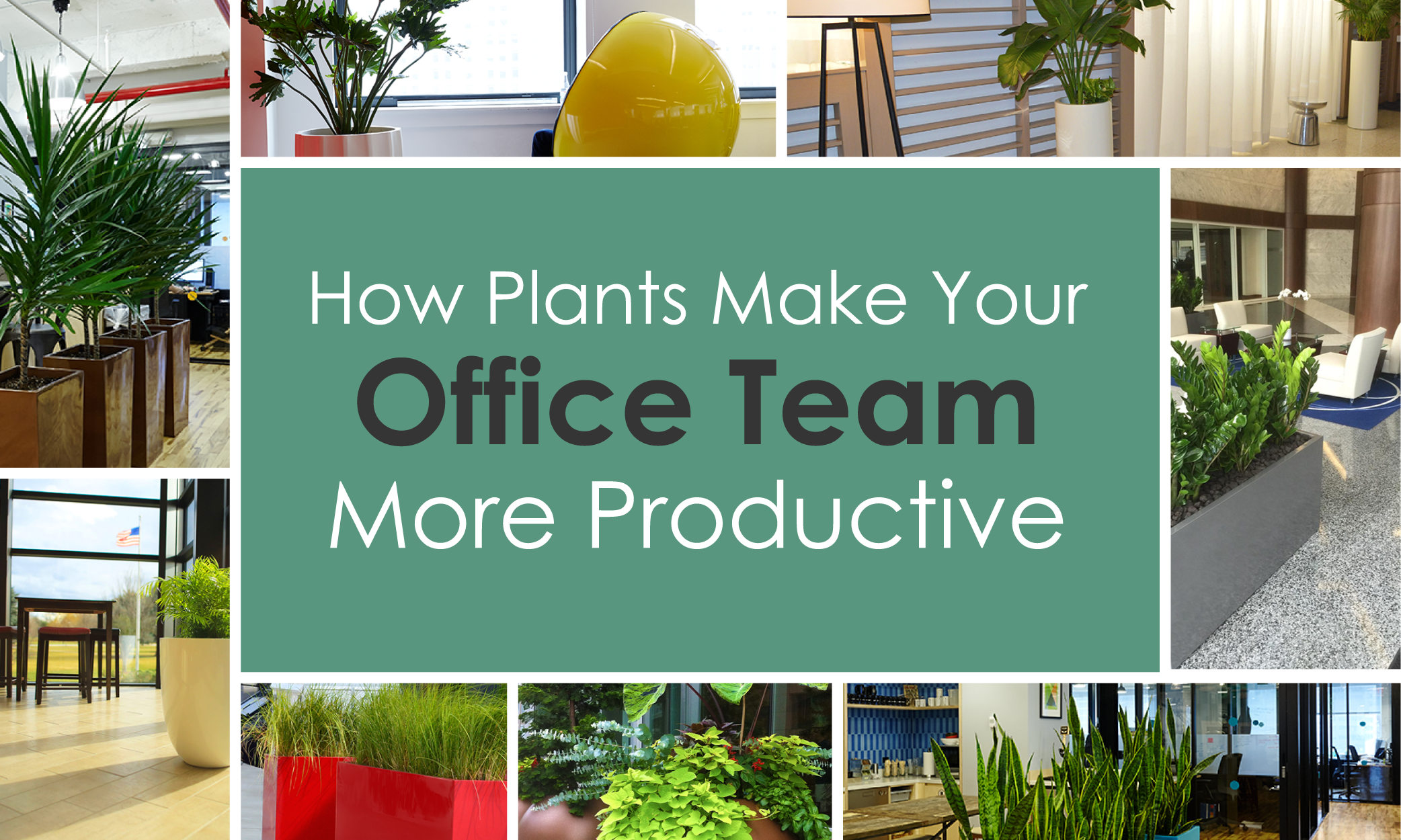 Plants Make Your Office Team More Productive