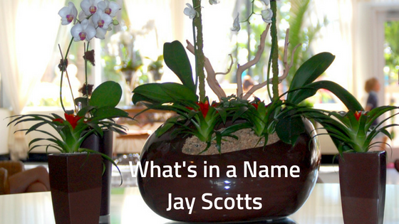 What's in a Name Jay Scotts