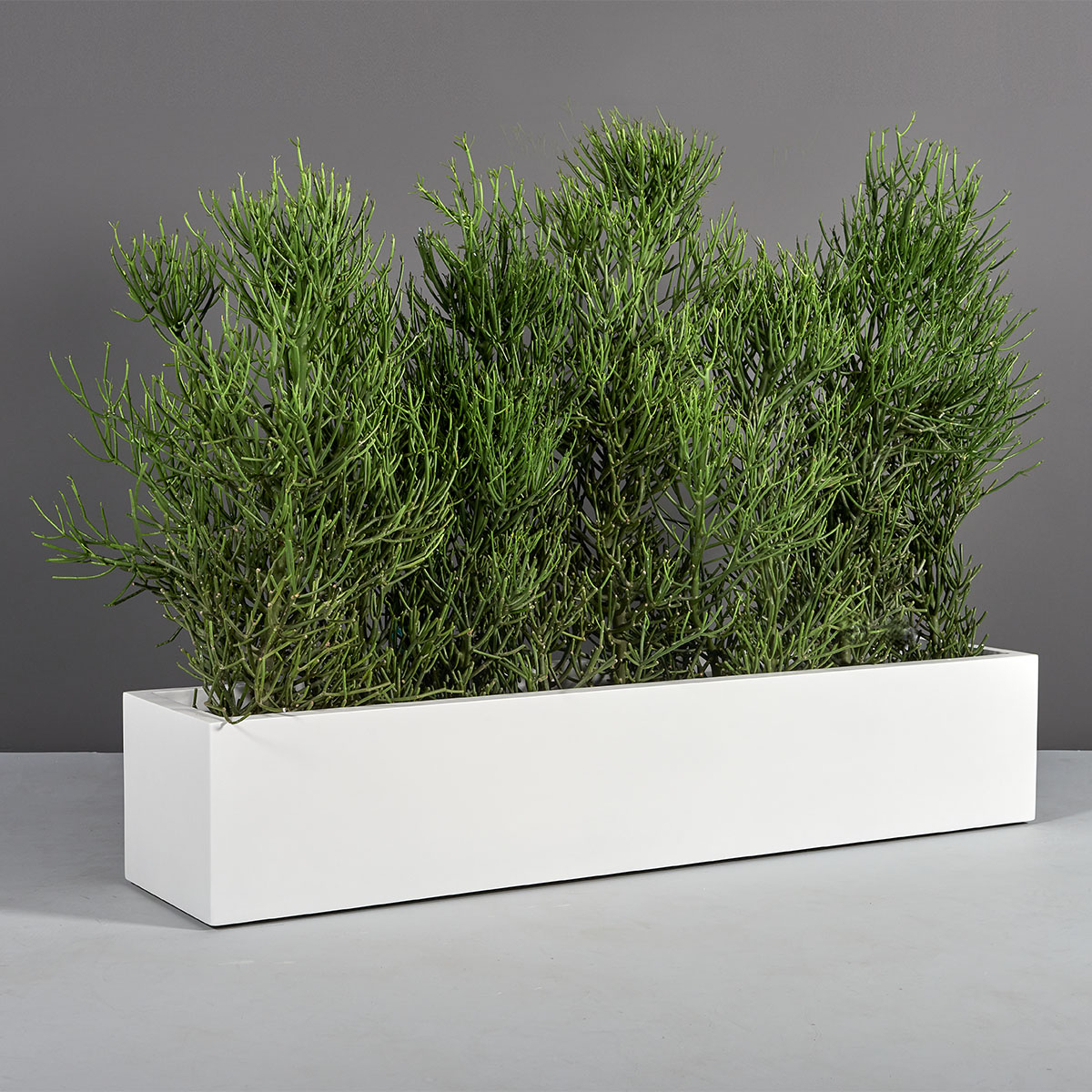 Narbonne Long Rectangular Planter