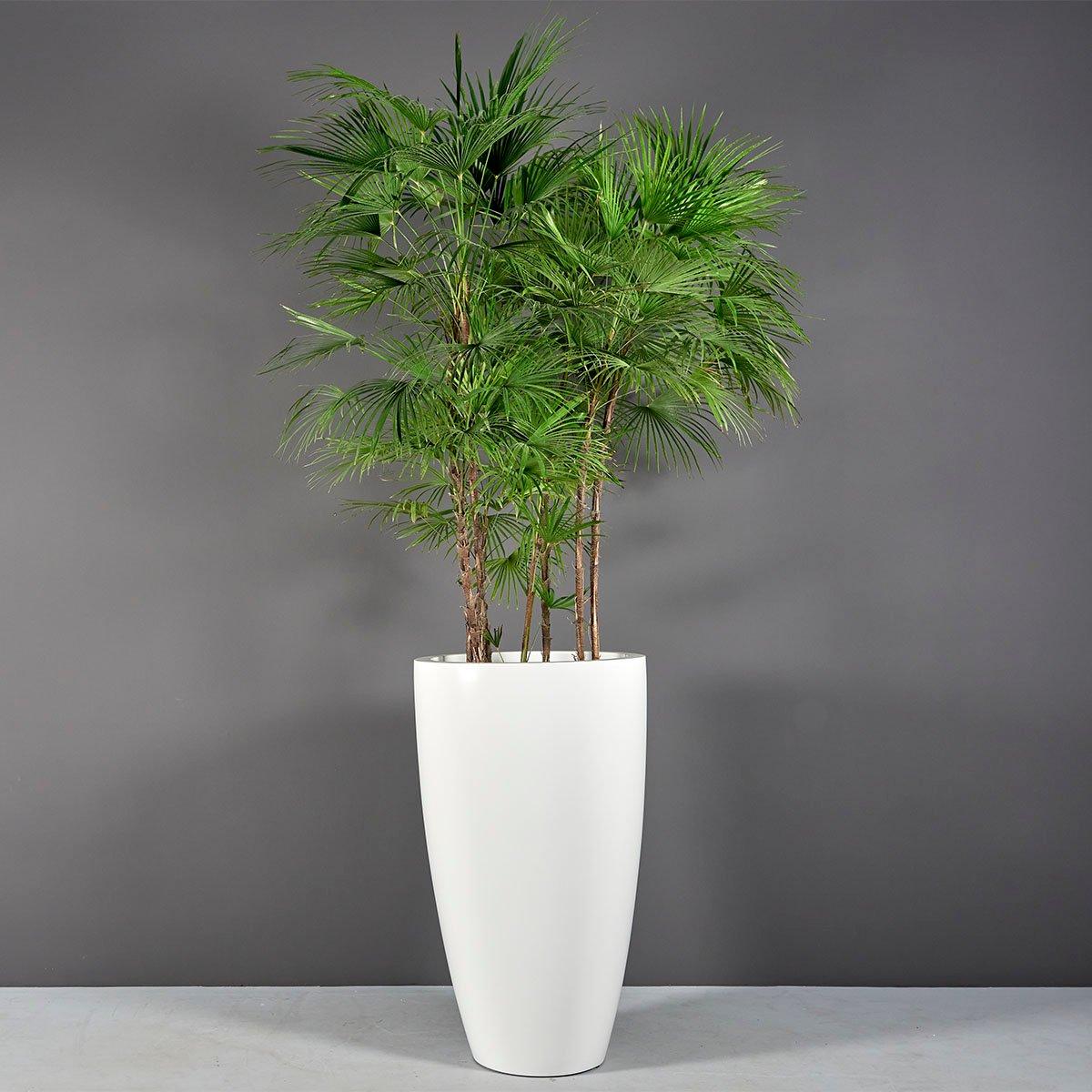 Peypin Tall Extra Large Round Planter