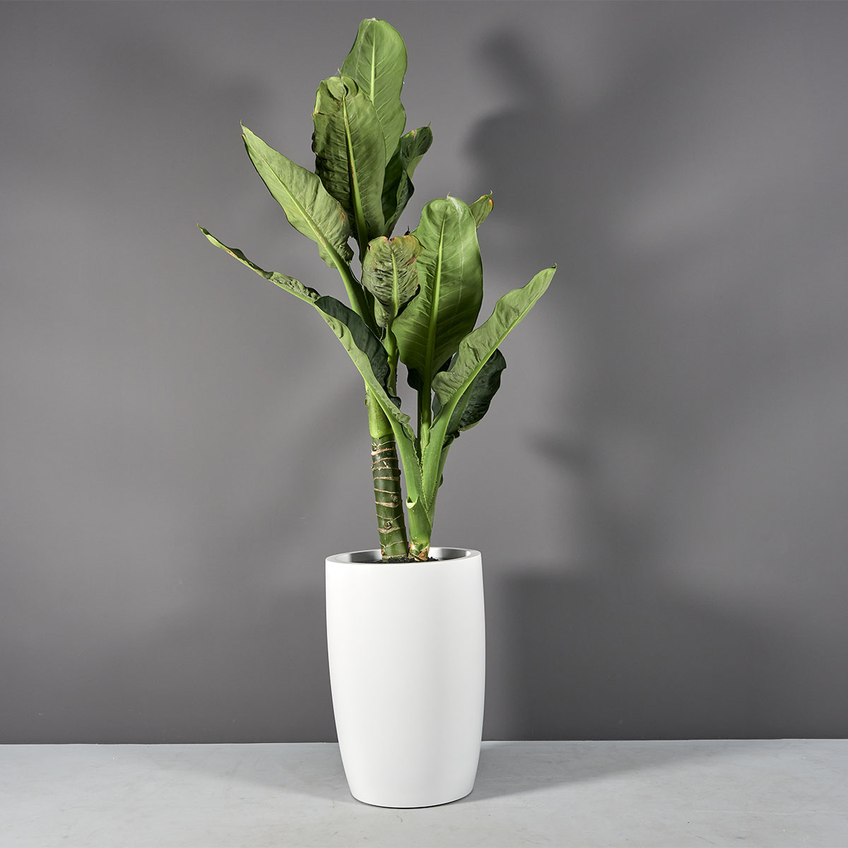 Lisbon Tall Round Tapered Planter