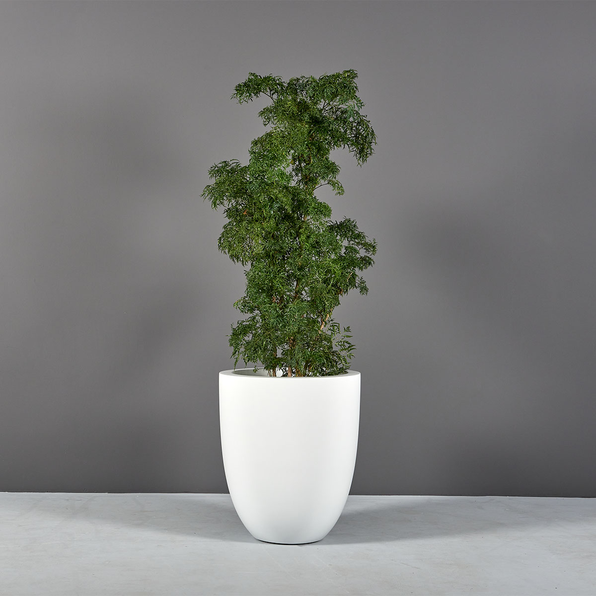 Valencia Tall Round Tapered Planter