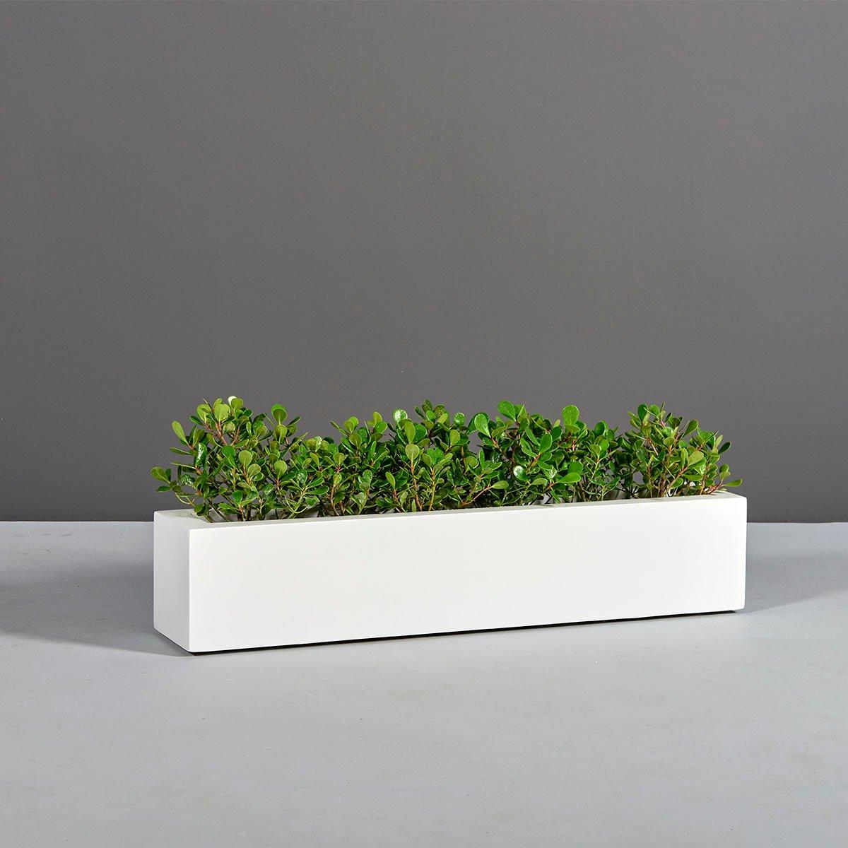 Salon Narrow Low Rectangular Planter