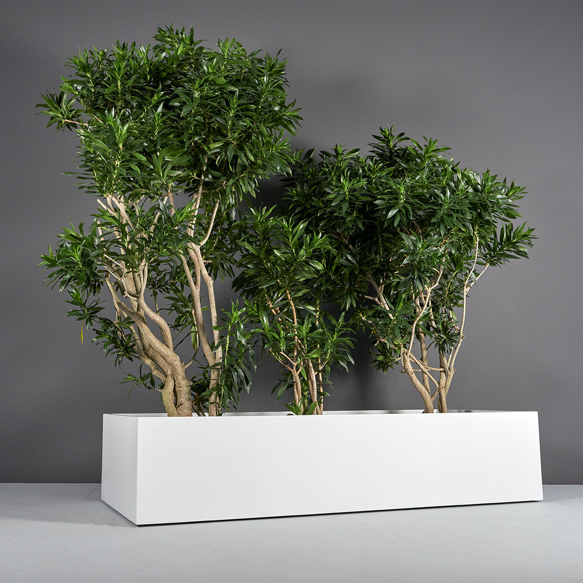 Selenge Extra Wide Large Rectangle Planter
