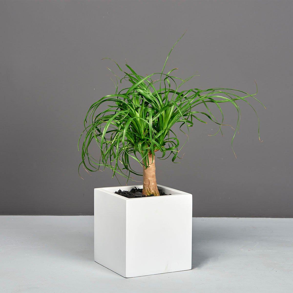 Tonto Small Cube Planter