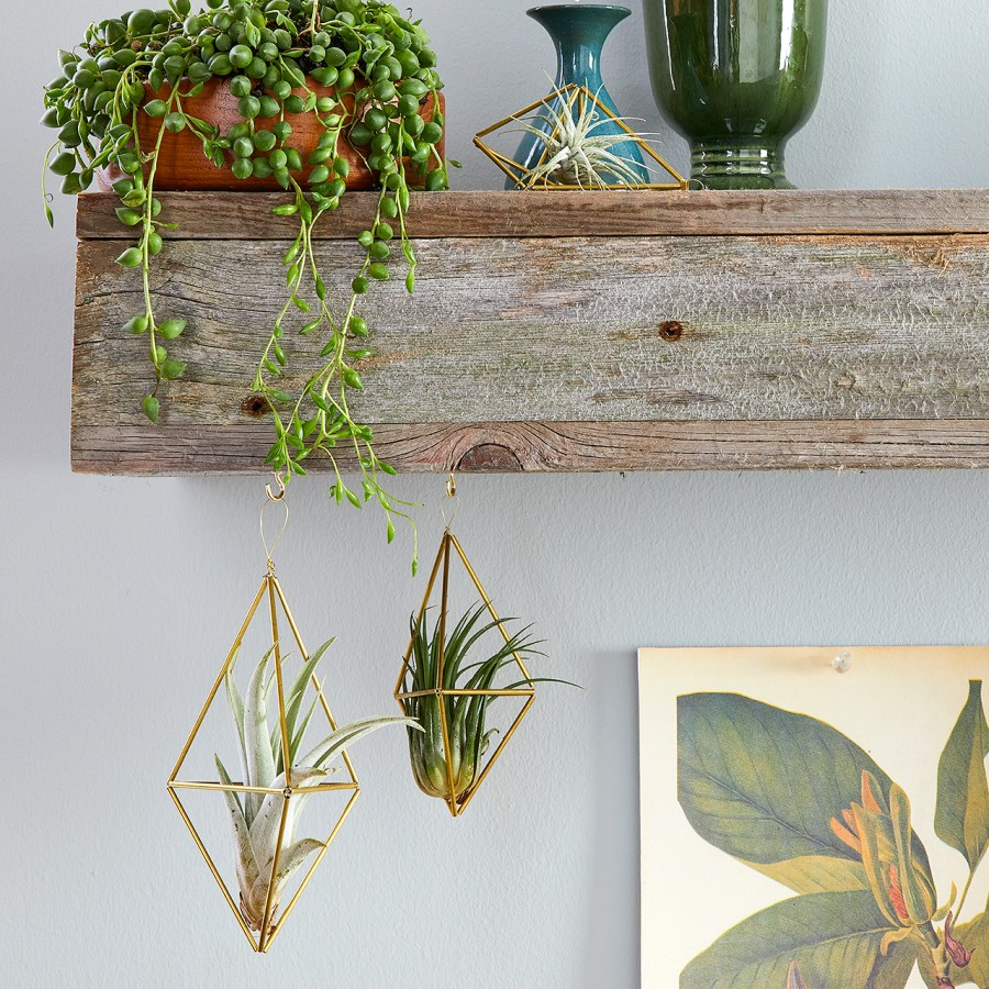 Hanging plants from shelves