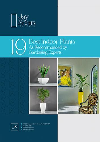 Best Indoor Plants Guide