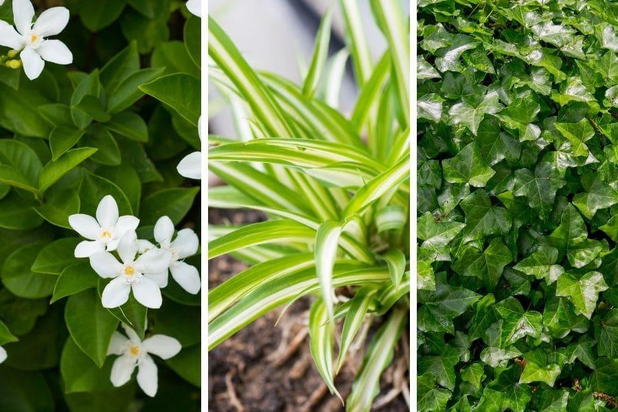 3 healthy plants