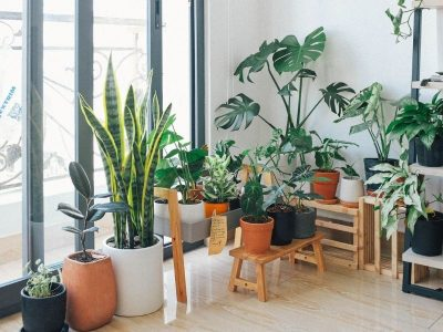 12 Easy Care Indoor Plants: No-Fuss Greenery for Busy People