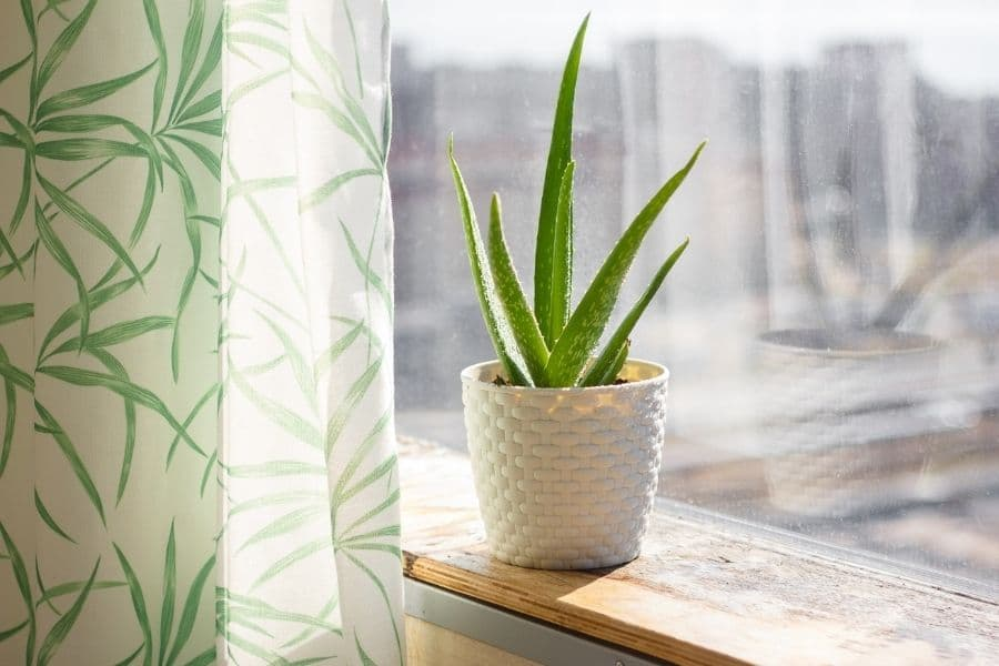 Easy Care Indoor Plants