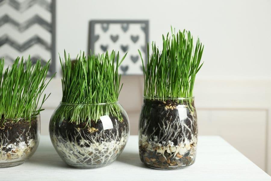 best potting soil for indoor plants