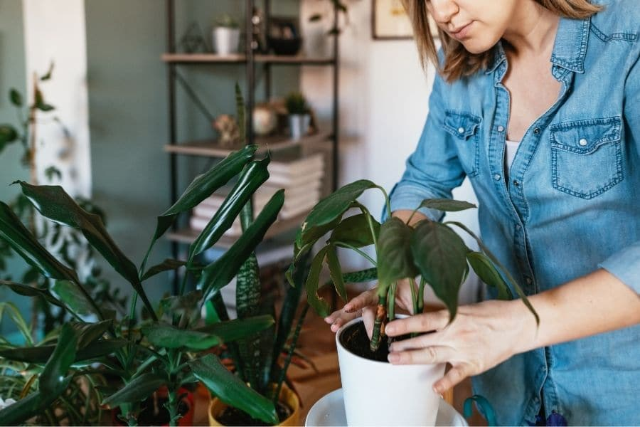 how to arrange indoor plants