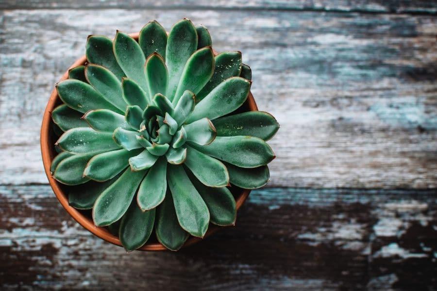 how to arrange indoor plants
