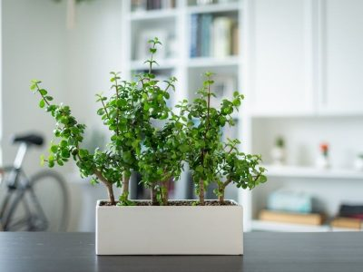 11 Low Maintenance Low Light Indoor Plants – And How To Make Them Flourish