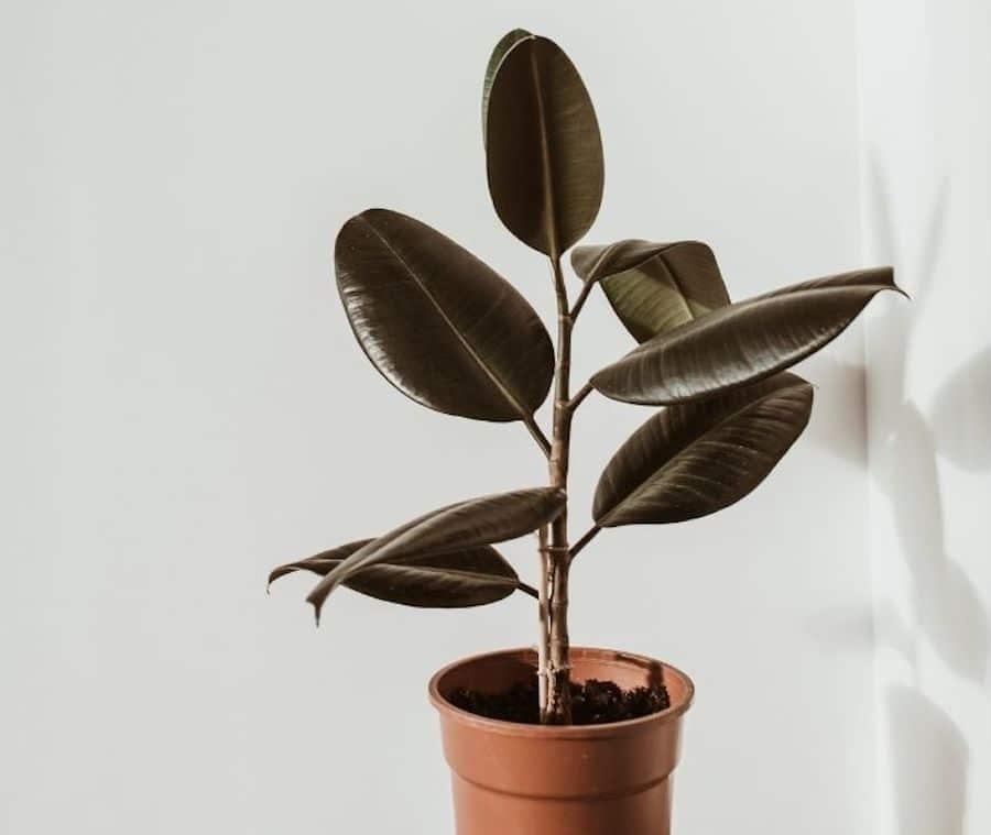 low maintenance low light indoor plants