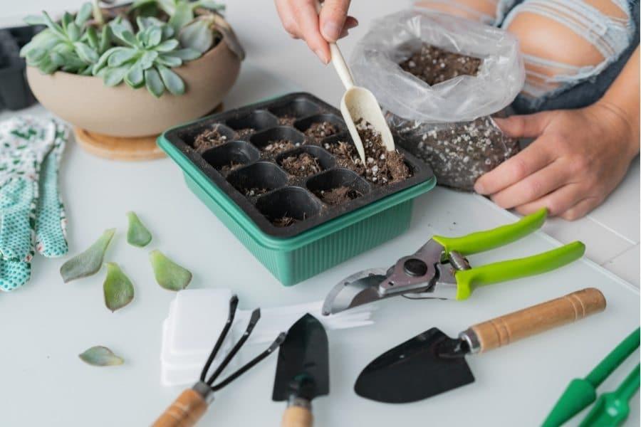 How to propagate using leaf cuttings