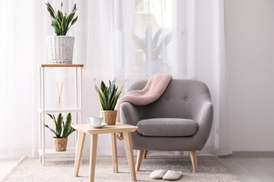 Use snake plant to decorate room