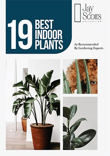 Best Indoor Plants Guide