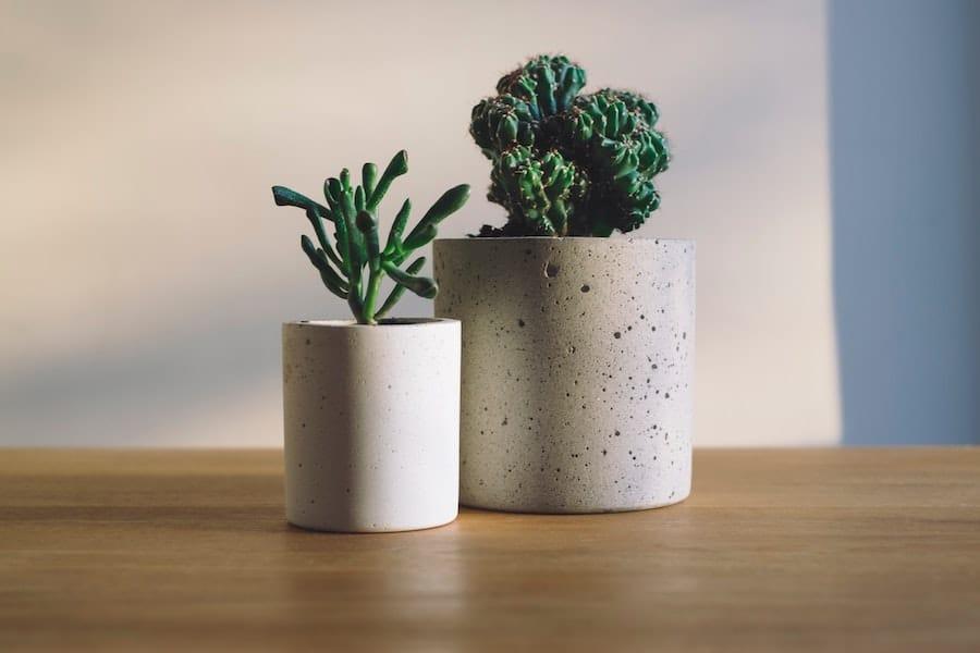 Indoor Small Concrete Planters