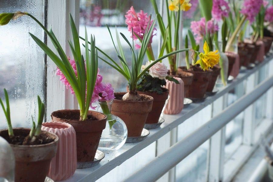 Beautiful flowers in ceramic planters