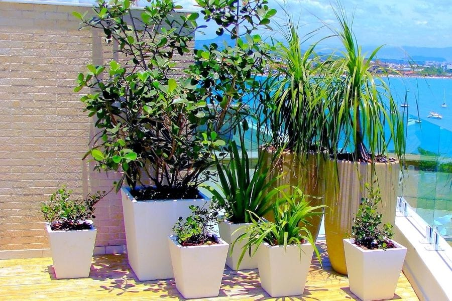 Potted plants with different sizes on the terrance