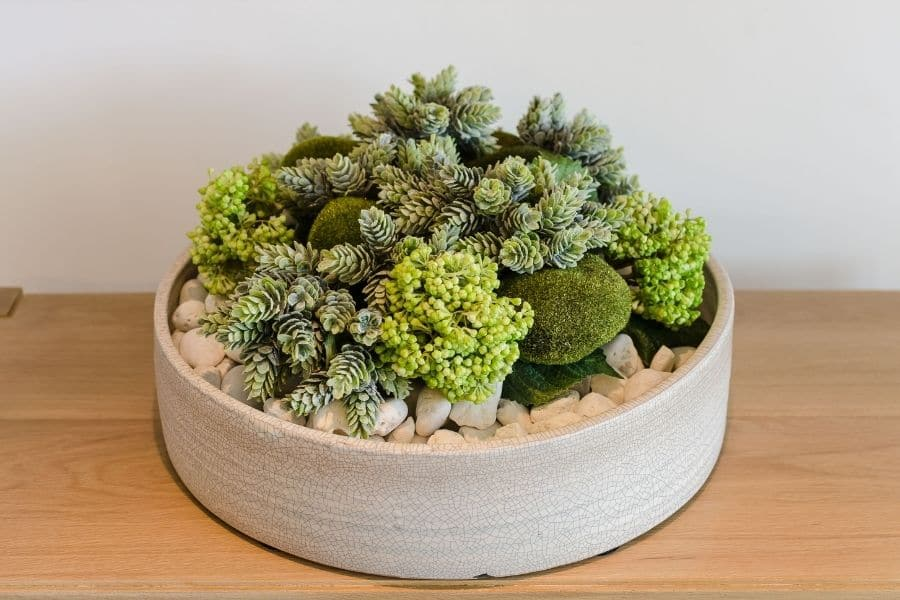 Plants in round white ceramic pot on wooden table