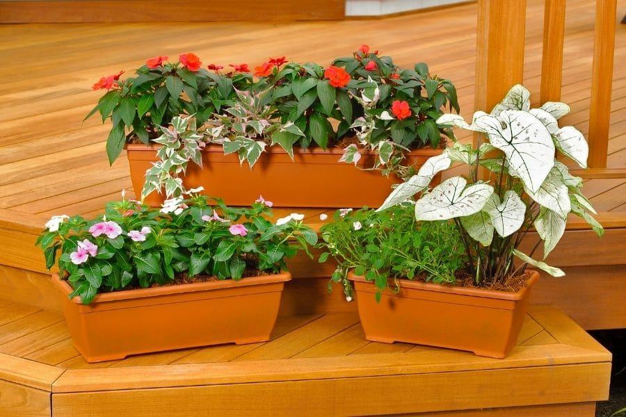 Flower planters on wood deck