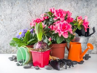 Pot Shapes for Plants: 6 Tips on Choosing the Right Planter