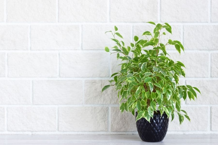 Home decoration - green house plant in flower pot