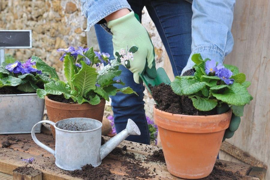 gardener doing the flower potting outside