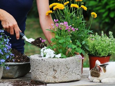 Trending Flower Pots: What's Hot In The World Of Container Gardening?
