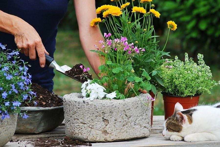 trending flower pots