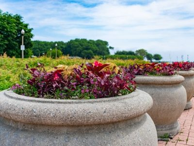 Extra Large Planter Ideas for Home and Commercial Spaces