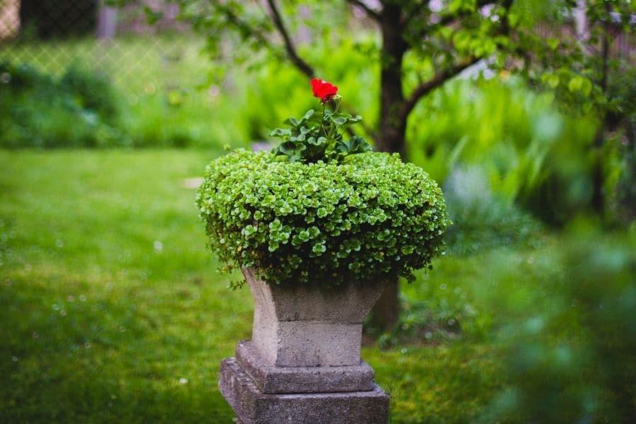 pedestal Urn with flowers in green garden