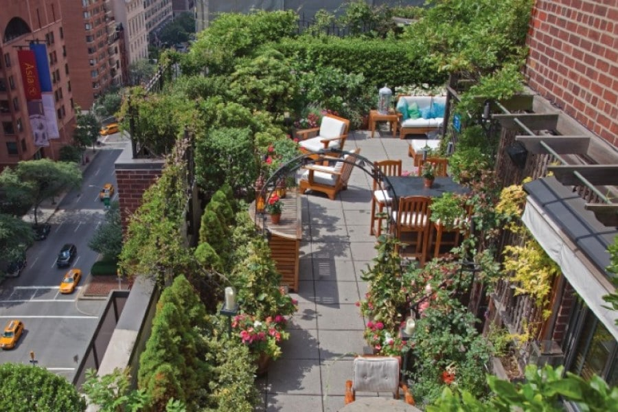 grow tall plants to create privacy on rooftop