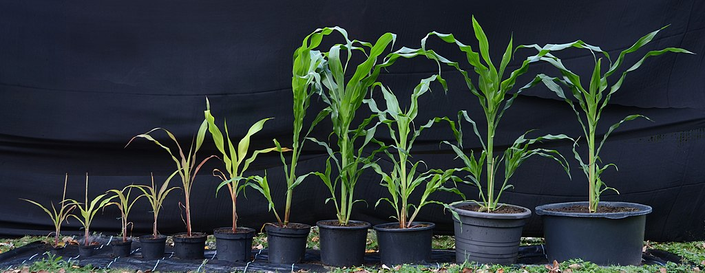planters size matter
