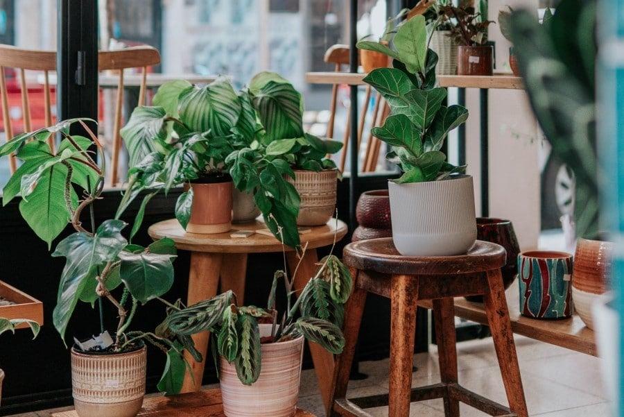 pot shapes for plants