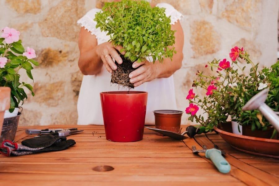 woman repotting a plant