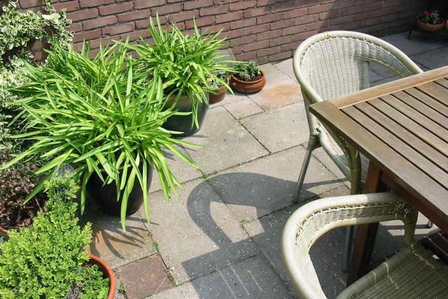 terrace with plants