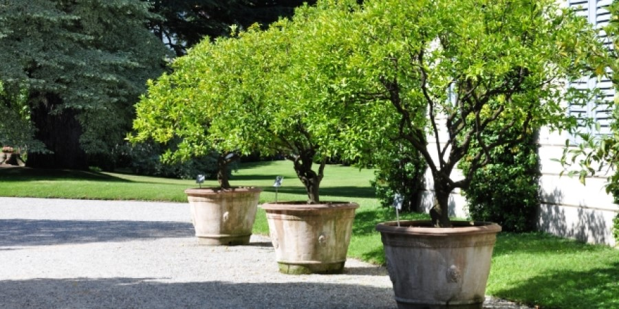 large tree planters on driveway