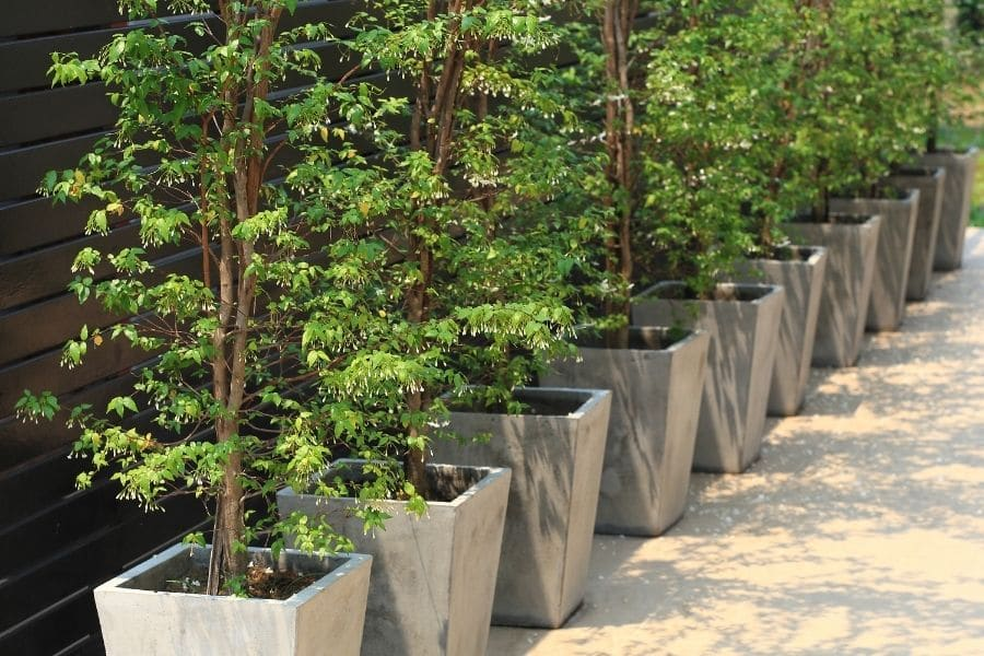 planting trees in pots