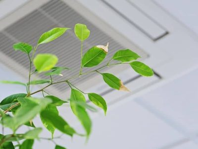 Plants That Dehumidify? Here's How To Fix Your Air Quality