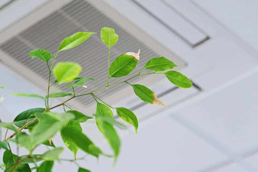 plants that dehumidify